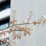 Willkommen im Frühling!