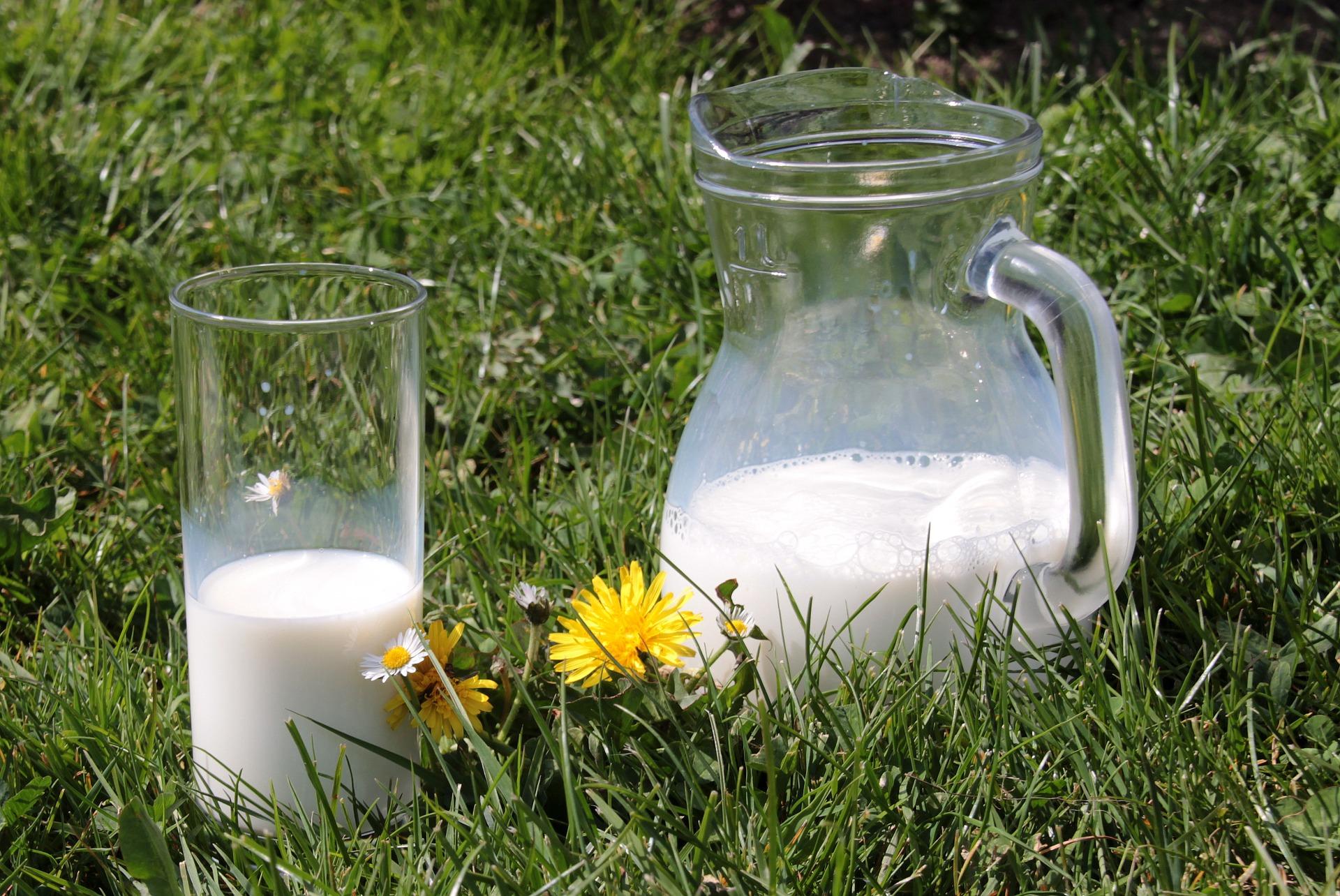 """[:de]""""Es stimmt gar nicht, dass Kühe Milch geben…""""[:]"""