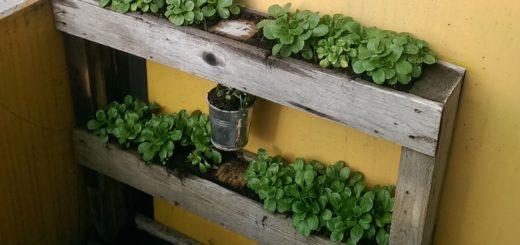 (Deutsch) Bungalowidee: Küchenkräuter auf dem Balkon