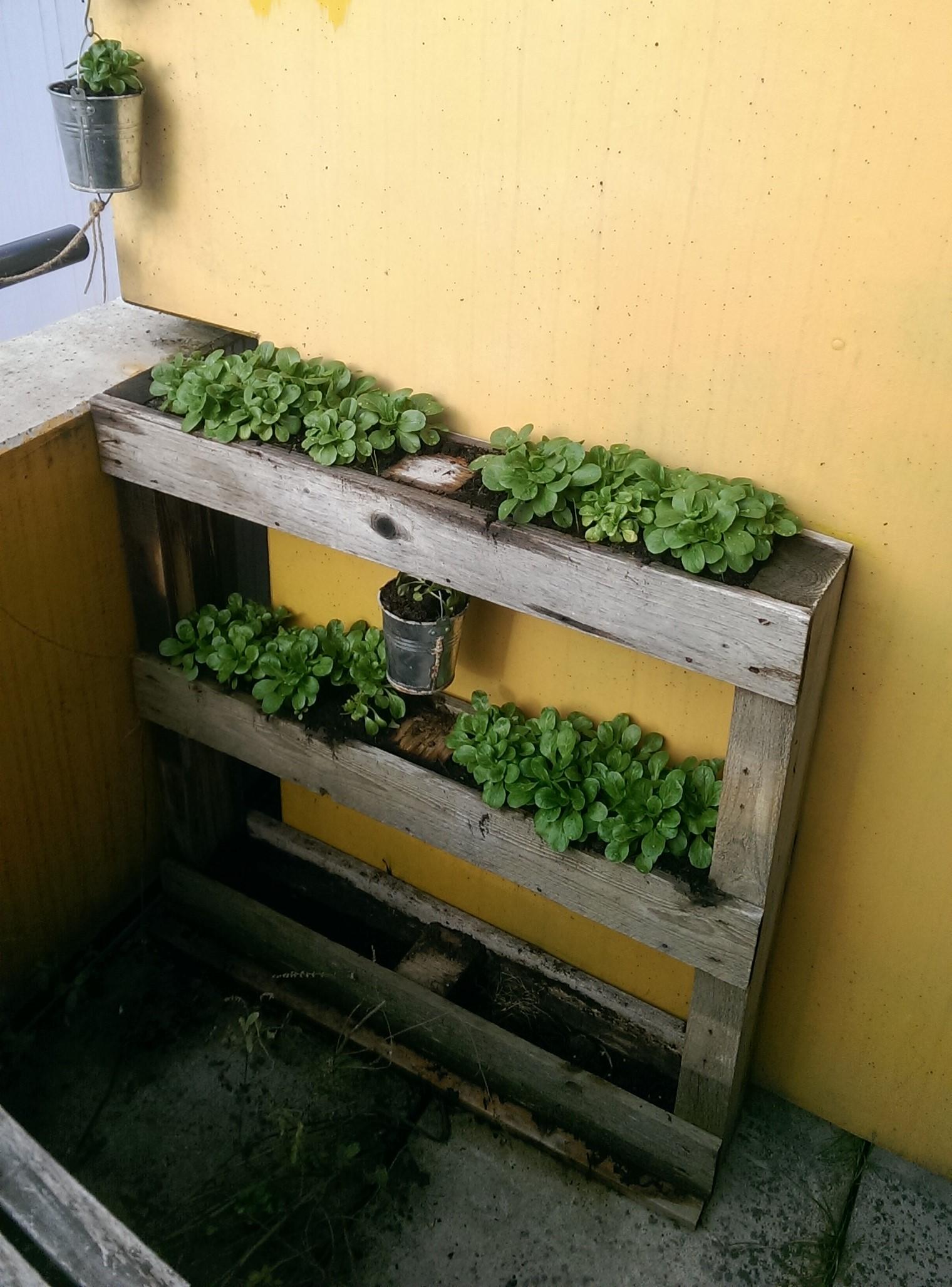 Bungalowidee: Küchenkräuter auf dem Balkon