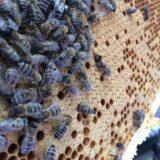 Bienen im Olymp #1