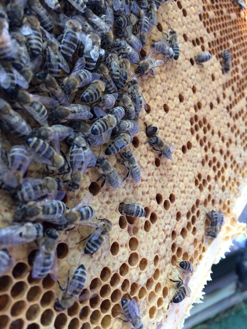 Bienen im Olymp