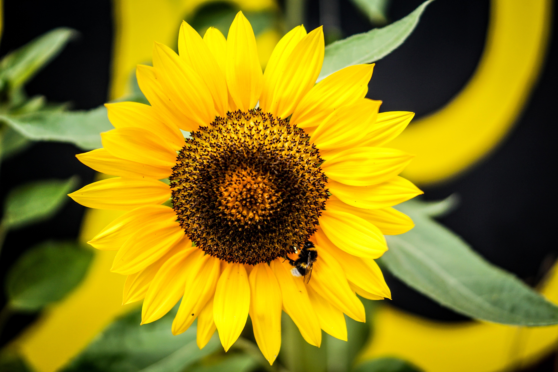 """Volksbegehren """"Artenvielfalt"""": Geht es wirklich nur um Bienen?"""